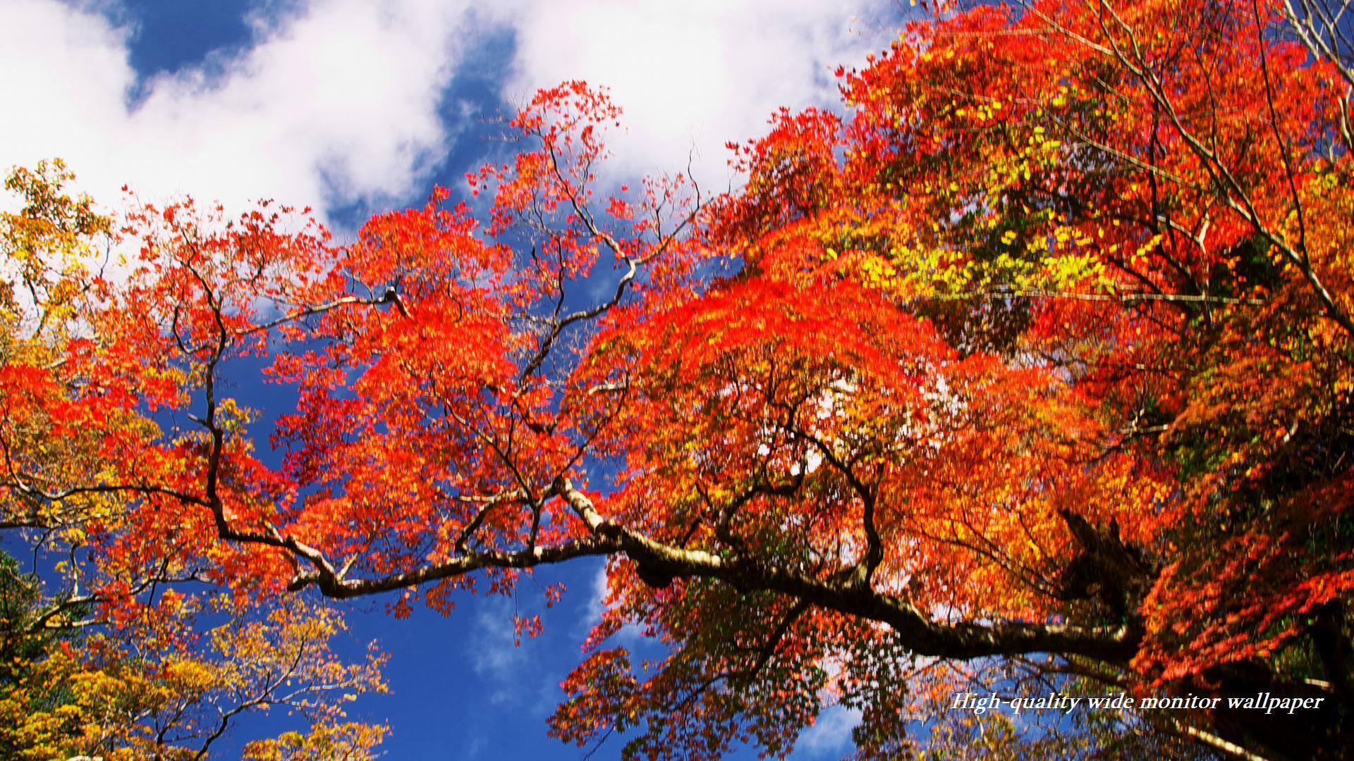 真っ赤に萌える紅葉をモチーフにしましたワイドモニター専門高画質壁紙 アスペクト比16 9 19 1080 秋の風景 自然風景 花 景色