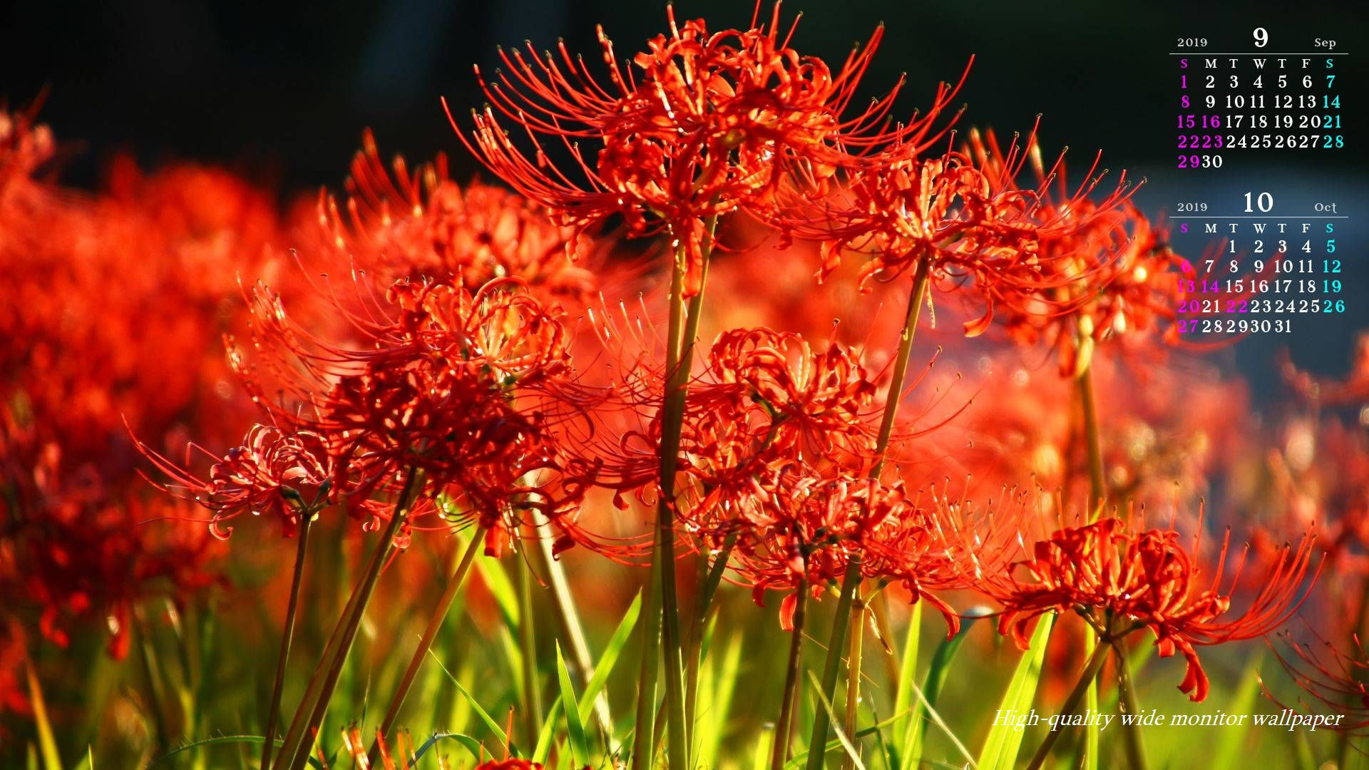 深紅の彼岸花をモチーフにしました19年9月10月のカレンダー付きワイドモニター高画質壁紙 19 1080 アスペクト比16 9 霧島連山 自然風景 星景写真 花 山野草